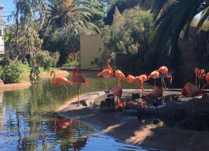 Zoo Park Lagos